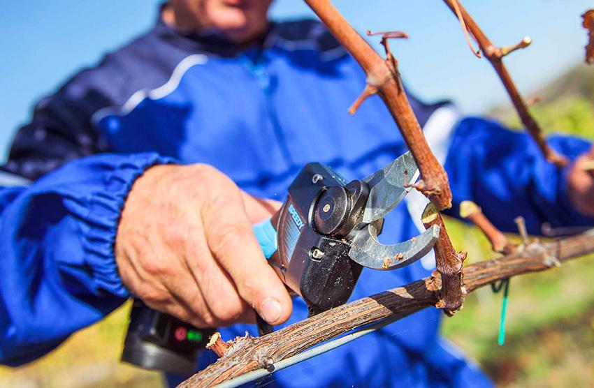 brze lagane i praktične akumulatorske škare koje su specifično dizajnirane da vrše male rezove pri velikim brzinama. Koriste se u rasadnicima i vinogradarstvu.